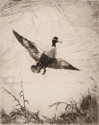 Frank Weston Benson, 'Shoveler Drake', 1920