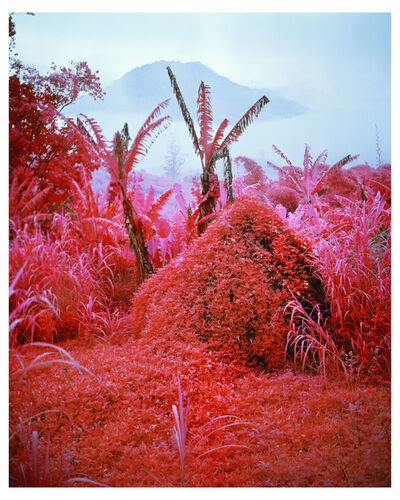 Richard Mosse, 'Come Out (1966) I', 2011