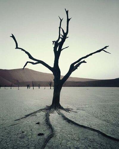 Jimmy Nelson, 'IV 472 - Dead Vlei, Sossusvlei Namibia', 2011