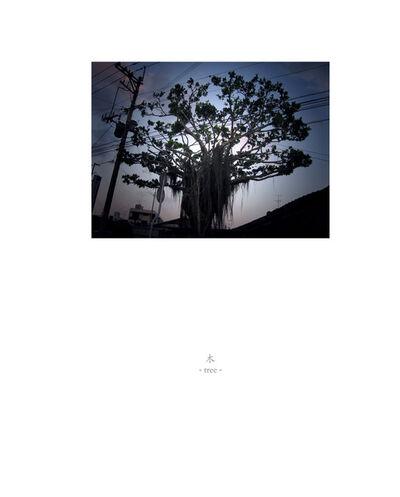 Osamu James Nakagawa, 'tree', 2001-2009