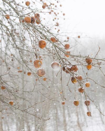 Cig Harvey, 'Frozen Apples'