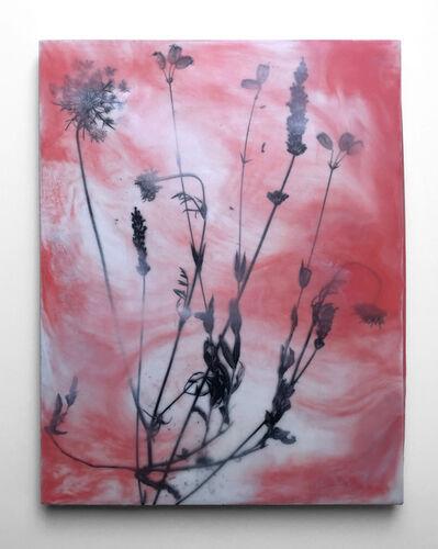 Julia Whitney Barnes, 'Botany of Poughkeepsie/Toner Pink 1', 2019