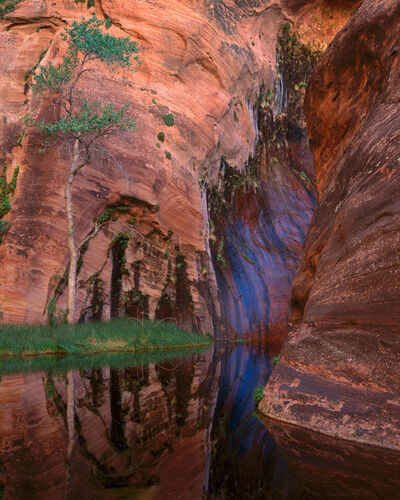 Kenneth Parker, 'Arrowhead Pool, Seep and Cottonwood, Escalante Wilderness, Utah'