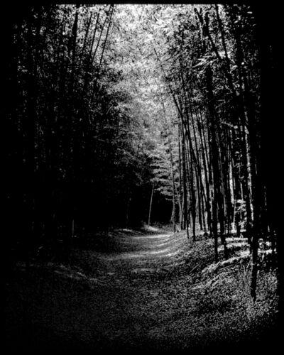 Soo-Whan Choi, 'Emptiness-Bamboo Grove', 2018
