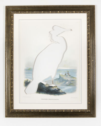 Brandon Ballengée, 'RIP Spectacled Cormorant: After Joseph Wolf, 1869', 2014