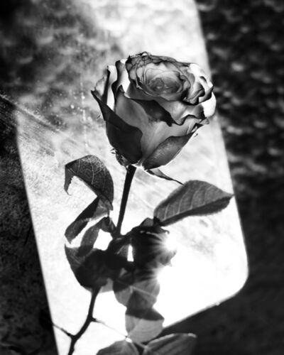 Res, 'Niko's Rose', 2020