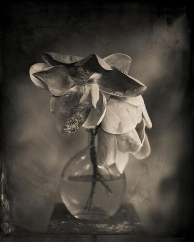 Keith Carter, 'Magnolia', 2014