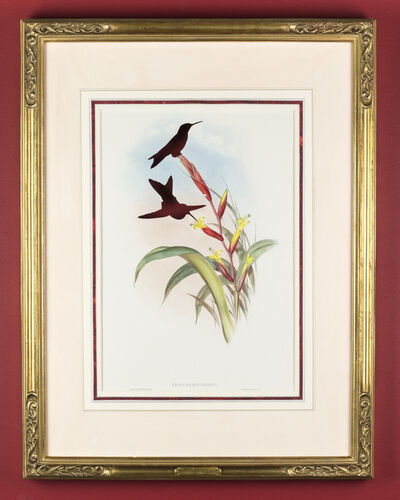 Brandon Ballengée, 'RIP Turquoise-throated Puffleg Hummingbird: After John Gould, 1868', 2015