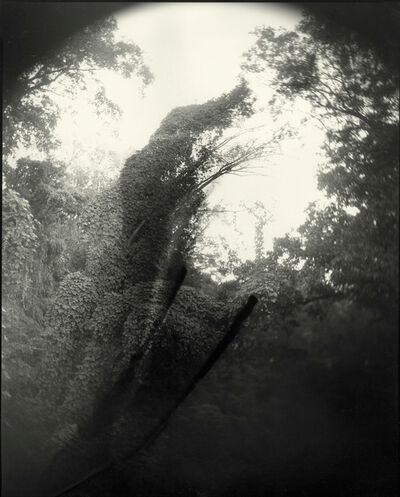 Sally Mann, 'Deep South, Untitled (Tree with Two Streaks)', 1998