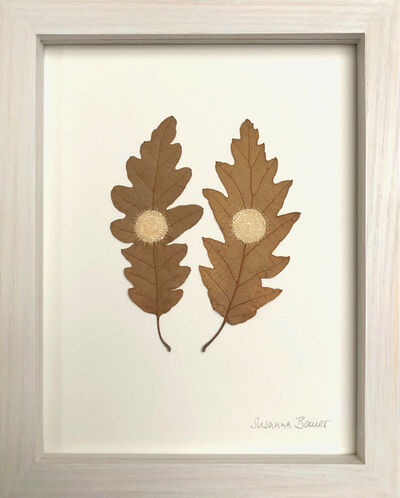 Susanna Bauer, 'Oak circles', 2019