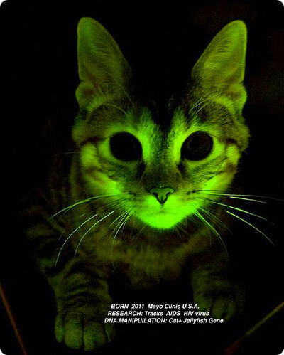 Lynn Hershman Leeson, 'Glowing  Cat from The  Infinity Engine (detail)', 2013-2015