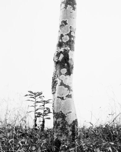 Daichi Koda, '(back)ground 01', 2019