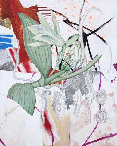 Fiona Ackerman, 'Orchidaceae', 2019
