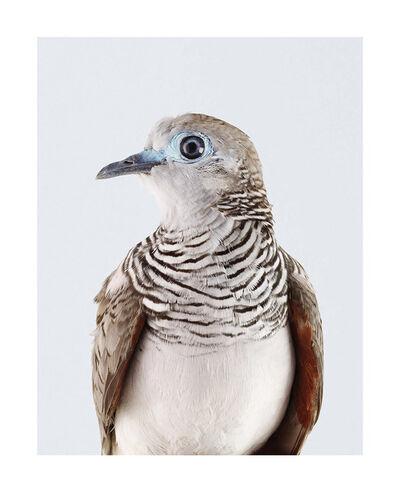 Leila Jeffreys, 'Peaceful Dove', 2017