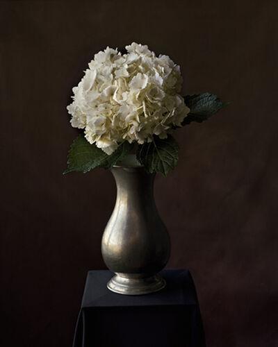 Tom Baril, 'Hydrangea in Vase (838)', 2007