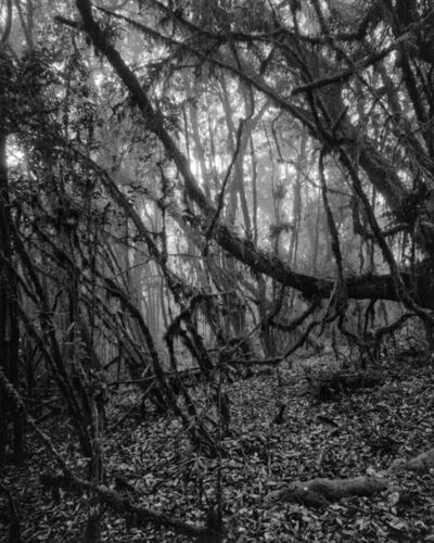 Miguel Winograd, 'Bosque Alto-Andino Charrascal, Silver Gelatin Print', 2021