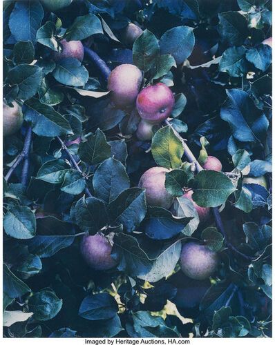 Eliot Porter, 'Three New England Nature Sudies', 1942; 1954; 1956