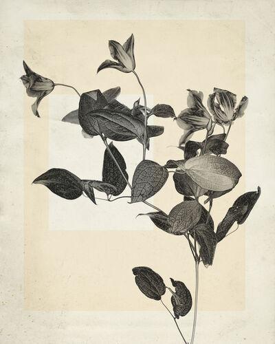 Thomas Ruff, 'flower.s.02', 2018