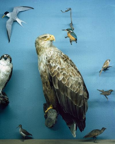 Anett Stuth, 'Object: Sea Eagle', 2004/21