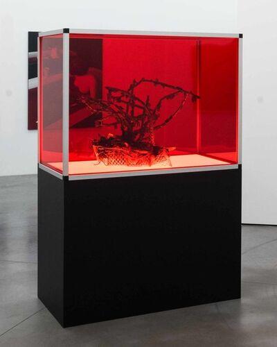 Joachim Coucke, 'LIBRA (Specimen II)', 2020