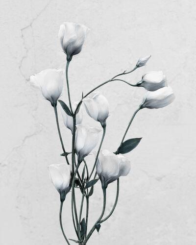 Vee Speers, 'Botanica #9', 2016
