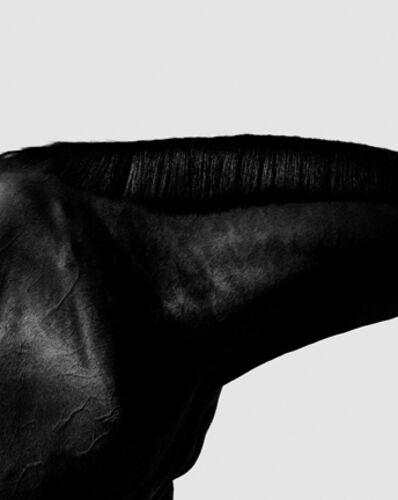 Steven Klein, 'Horse Neck IV', 1995