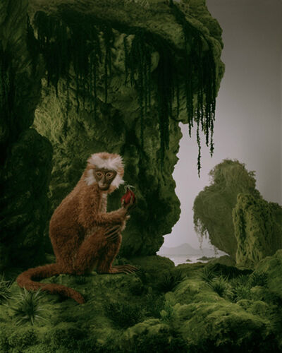 Didier Massard, 'The Monkey', 2011