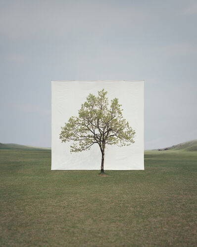 Myoung Ho Lee, 'Tree #14', 2009