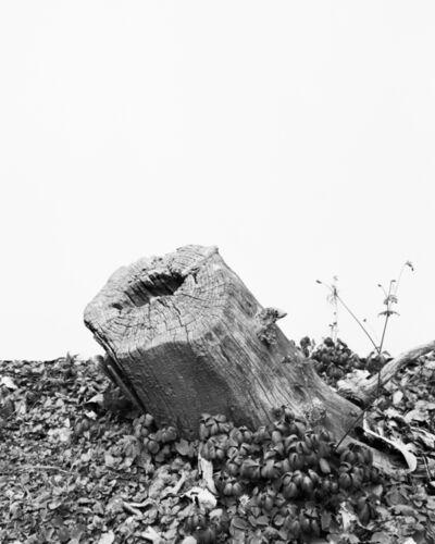 Daichi Koda, '(back)ground 14', 2019