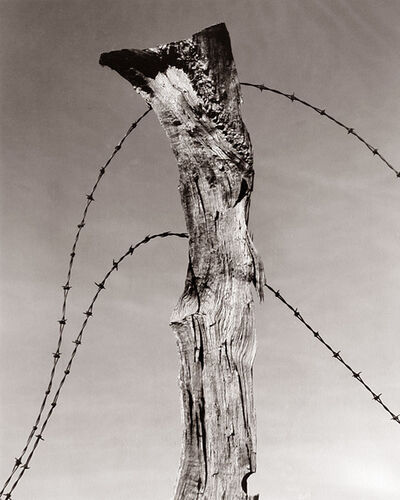 Willard Van Dyke, 'Fence Post and Barbed Wire', 1930