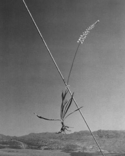 Horst P. Horst, 'Ashodel on a Tent Guy, Quradaq, Iran', 1949