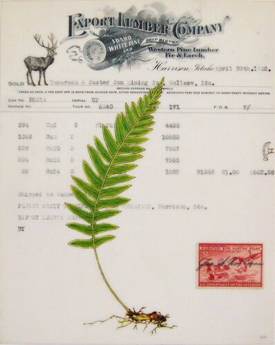 Kenna Moser, 'Licorice Fern #1'