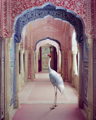Karen Knorr, 'Faithful Companion, Samode Palace', 2020