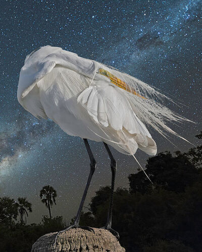 Cheryl Medow, 'Great Egret and the Milky Way', 2019