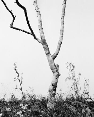 Daichi Koda, '(back)ground 08', 2019