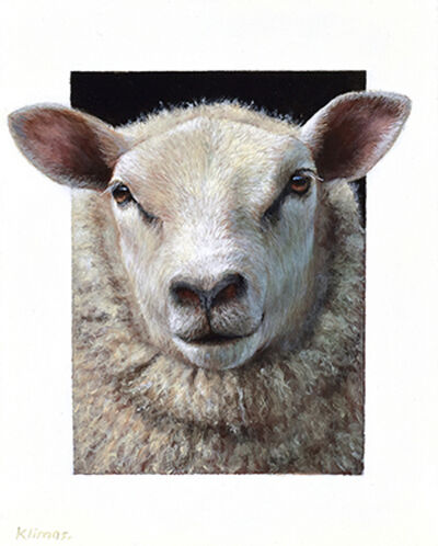 Alexandra Klimas, 'Daisy the Sheep'