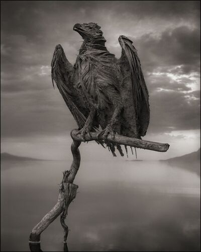 Nick Brandt, 'Calcified Fish Eagle, Lake Natron, 2012', 2012