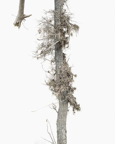Anna Collette, 'Gathering Ground #73', 2014