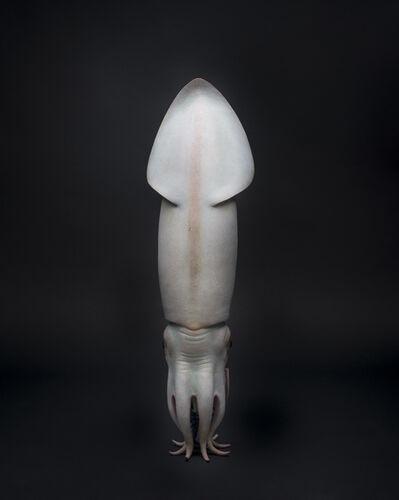 Judy Fox, 'Squid', 2011