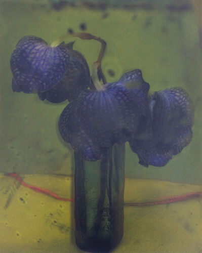 Sarah Moon, 'Les Orchidees', 2010