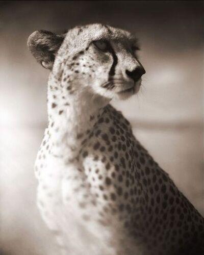 Nick Brandt, 'Cheetah Against Dark Sky, Masai Mara', 2004