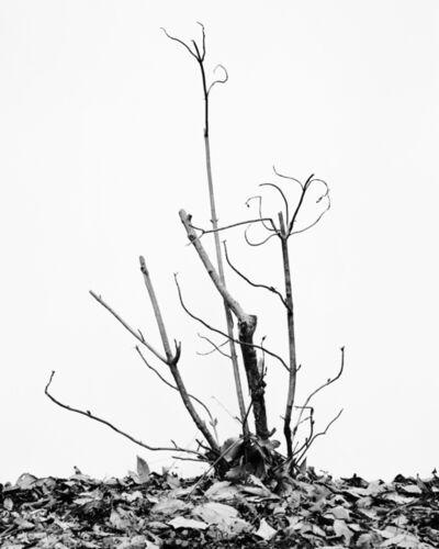 Daichi Koda, '(back)ground 06', 2019