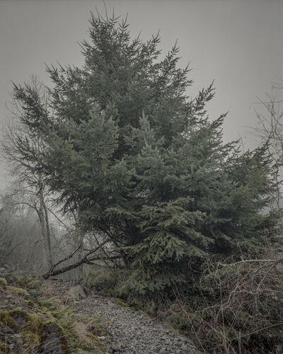 Chris Bennett, 'From the series Darkwood, #2', 2014