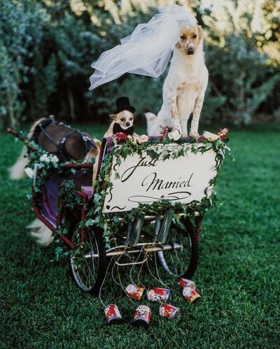 Bruce Weber, 'Bride+Groom, Dog Wedding, Golden Beach, Florida', 1998