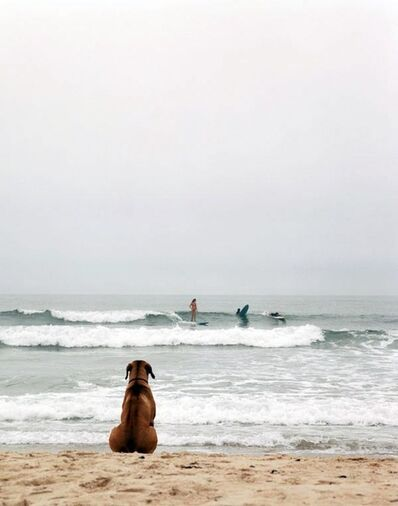 Michael Dweck, 'Beach Dog, Montauk, NY', 2002