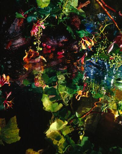Margriet Smulders, 'Bacchus Tree', 2007