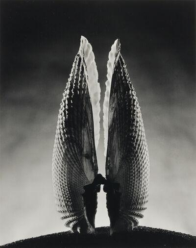Ruth Bernhard, 'Angelwing'