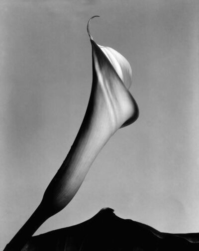 Imogen Cunningham, 'Calla Lily with Leaf', 1920