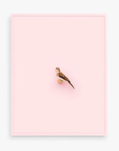 Daniel Handal, 'Paradise Whydah (Ray of Love)', 2017
