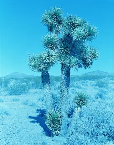 David Benjamin Sherry, 'Joshua Tree, Joshua Tree National Park, California', 2020